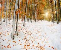 Sneeuw in het bos royalty-vrije stock fotografie
