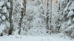 Sneeuw in het de winterbos stock videobeelden