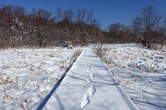 Sneeuw in het hout Stock Foto's