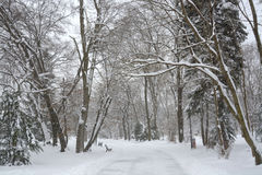 Sneeuw in het Park Dec, 2014 in van Sofia, Bulgarije 29 Stock Fotografie
