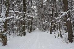 Sneeuw in het Park in Sofia, 29 Dec, 2014 Stock Afbeeldingen