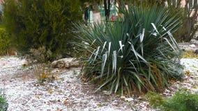 Sneeuw in het zuidelijke gebied met groene installaties en thuja stock videobeelden