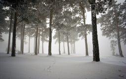 Sneeuw hout, die in de mist verbergen Stock Foto