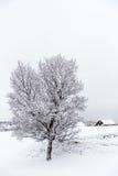 Sneeuw III Royalty-vrije Stock Foto's