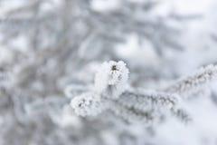 Sneeuw-inegekrompene spartakken De achtergrond van het de winteronduidelijke beeld Vorstboom Royalty-vrije Stock Foto