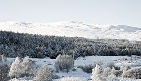 Sneeuw landschap Royalty-vrije Stock Fotografie