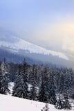 Sneeuw landschap Stock Foto's