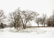 Sneeuw landschap met bomen Stock Fotografie