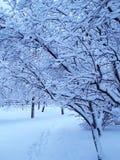 Sneeuw mooie bomen in de winter Stock Afbeeldingen