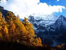 Sneeuw moutain die met de kleur van de Herfst wordt behandeld Stock Foto's