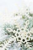 Sneeuw nette takken royalty-vrije stock foto's