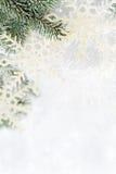 Sneeuw nette takken royalty-vrije stock foto