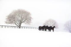 Sneeuw ochtend Royalty-vrije Stock Afbeelding