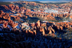 Sneeuw omvat Bryce Canyon National Park Stock Fotografie