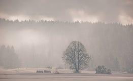 Sneeuw omvat land Stock Afbeelding