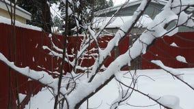 Sneeuw Omvatte Prune Trees Stock Afbeelding