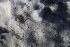 Sneeuw onder de lentezon Stock Foto's