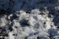 Sneeuw onder de lentezon Royalty-vrije Stock Foto's