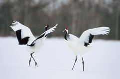 Sneeuw onder Vogels Stock Afbeelding