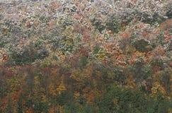 Sneeuw op Autumn Trees, Allegheny-Bergen Stock Afbeelding