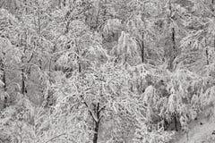 Sneeuw op bomen royalty-vrije stock afbeelding