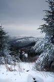 Sneeuw op bomen omhoog een berg stock foto