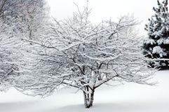 Sneeuw op boom Stock Afbeeldingen