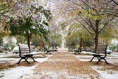 Sneeuw op de bladeren Stock Afbeelding