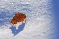 Sneeuw op de bladeren Stock Foto's