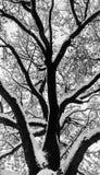 Sneeuw op de boom Royalty-vrije Stock Foto's