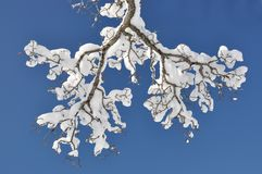 Sneeuw op de boom Royalty-vrije Stock Afbeelding