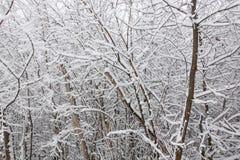 Sneeuw op de boomtakken De wintermening van bomen die met sneeuw worden behandeld De strengheid van de takken onder de sneeuw Sne royalty-vrije stock afbeelding