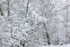 Sneeuw op de boomtakken De wintermening van bomen die met sneeuw worden behandeld De strengheid van de takken onder de sneeuw Sne stock afbeeldingen