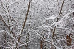 Sneeuw op de boomtakken De wintermening van bomen die met sneeuw worden behandeld De strengheid van de takken onder de sneeuw Sne stock afbeelding