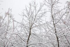 Sneeuw op de boomtakken De wintermening van bomen die met sneeuw worden behandeld De strengheid van de takken onder de sneeuw Sne royalty-vrije stock fotografie
