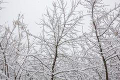 Sneeuw op de boomtakken De wintermening van bomen die met sneeuw worden behandeld De strengheid van de takken onder de sneeuw Sne stock foto's