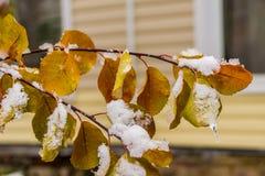 Sneeuw op de herfst oranje bladeren stock foto's