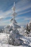Sneeuw op de winterboom Royalty-vrije Stock Foto