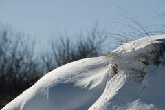 Sneeuw op duin Stock Afbeeldingen