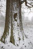 Sneeuw op een boomboomstam Stock Fotografie