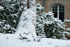 sneeuw op een boomboomstam in stedelijk park royalty-vrije stock afbeelding