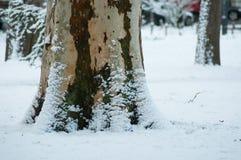 sneeuw op een boomboomstam in stedelijk park royalty-vrije stock foto's