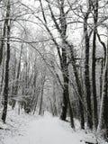 Sneeuw op een bosweg in Luxemburg stock afbeeldingen
