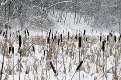 Sneeuw op een riet, meer in bos. Royalty-vrije Stock Afbeelding