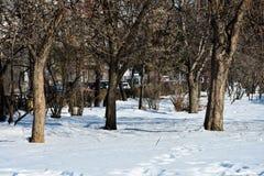 Sneeuw op een zonnige dag in Union Square Piata Unirii Royalty-vrije Stock Foto