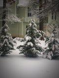 Sneeuw op evergreens Royalty-vrije Stock Foto's