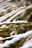 Sneeuw op grasstammen Stock Foto's