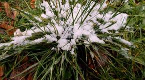 Sneeuw op het gras stock foto
