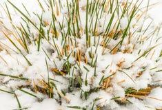 Sneeuw op het gras stock afbeelding