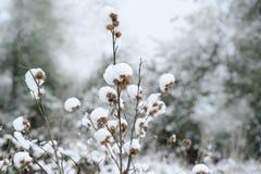 Sneeuw op kleine droge die vruchten van installatie op ege van bos, zaadhoofd met sneeuw wordt behandeld stock afbeelding